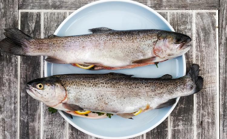 mercúrio em peixes