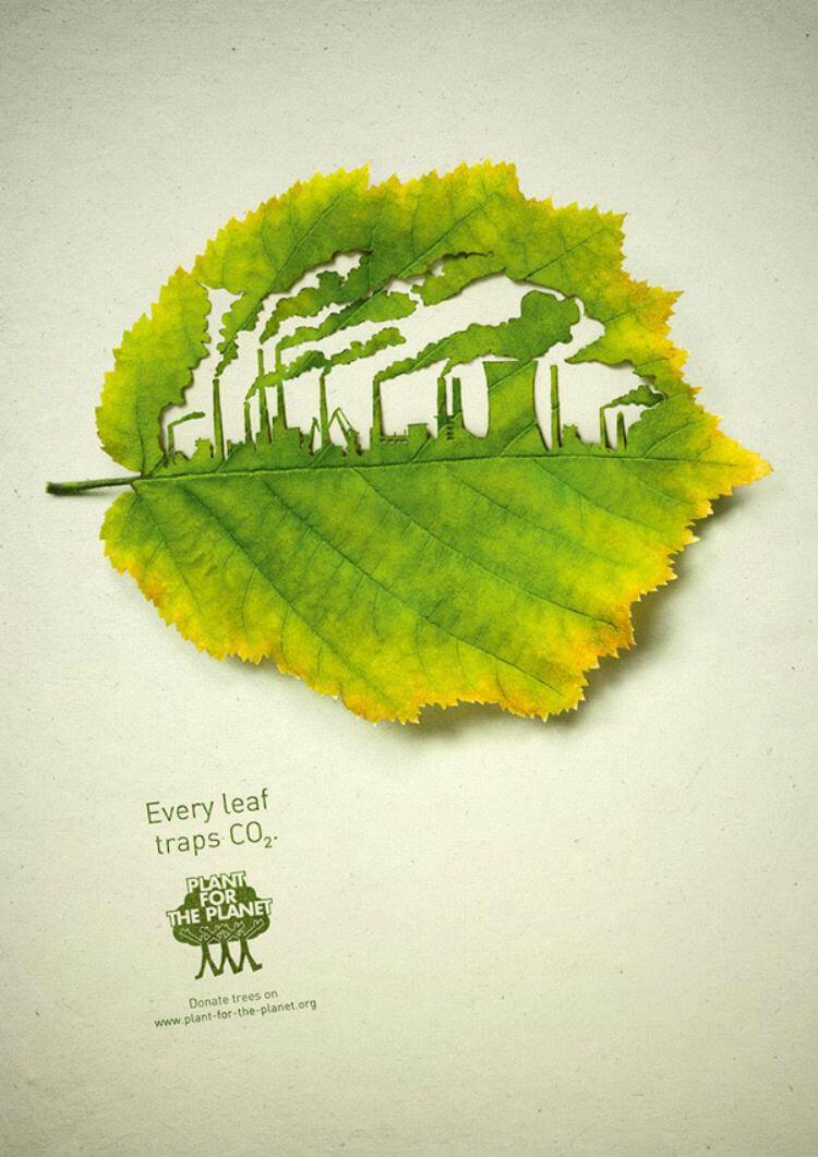 Cada folha sequestra CO2. As plantas absorvem a poluição que criamos