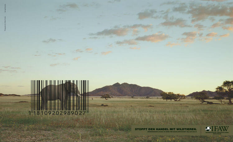 Elefante: comércio da vida animal