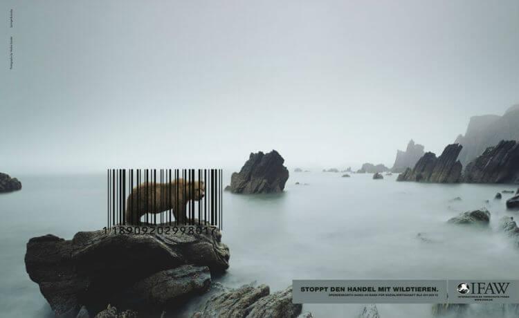 Urso: comércio da vida animal