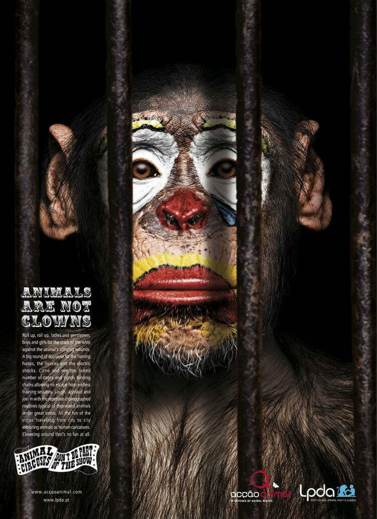 Animais de circo, diga não