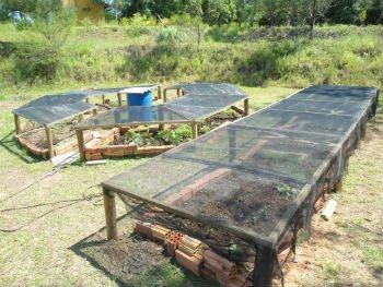 Protegendo a horta do calor