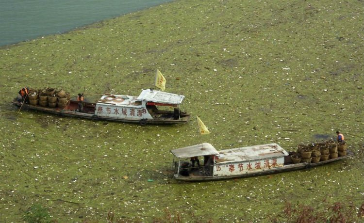trabalhadores removendo lixo do rio Yangtze