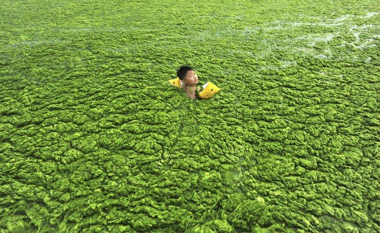 Menino nada em rio repleto de algas em Qindao, na província de Shandong