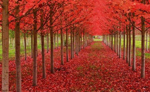 St. Louis, Oregon, Estados Unidos