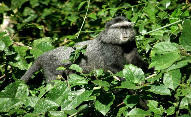 Floresta Kakamega, Quênia
