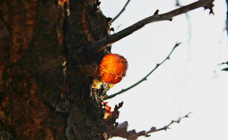 proteção, árvores