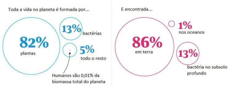 Porcentagens de biomassa
