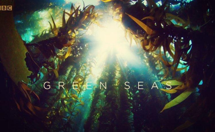 Episódio 5: Verdes Mares