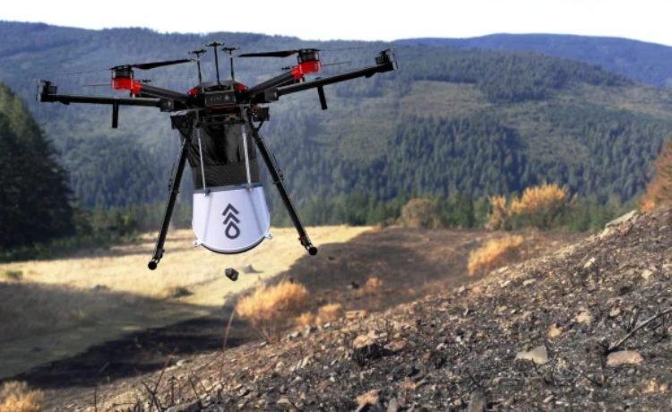 Drone planta árvores