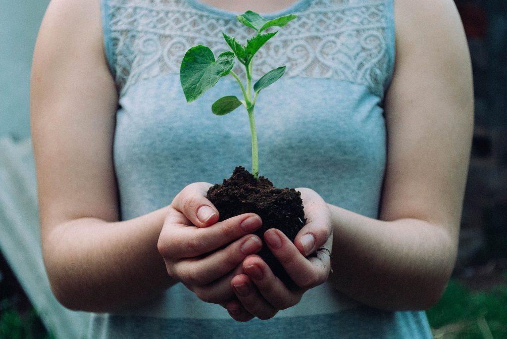 Papel semente como plantar